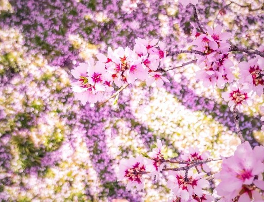Flowers in Full Bloom – Quinta de los Molinos Park Madrid